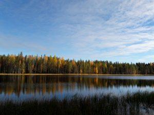 Syksyinen metsä heijastuu peilityyneen veteen, valokuva.